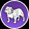 Bulldock Browser