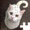 Super Cute Kitty Cat Mercedes- a short tail Domestic Cat Free