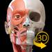 筋肉系 - 解剖学3Dアトラス - 人体の骨格と筋肉 - 3D Atlas of Anatomy