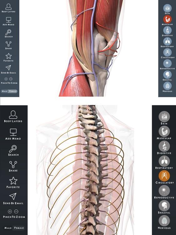 Human Anatomy Atlas Premium 3d Visual Guide For Skeleton And Bones