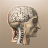 Klassische Anatomie