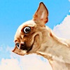 3D Mega Cute Little Puppy Racing Game - My All New Cool Toy Games For Good Girls Free