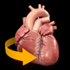 心臓解剖 Heart 3D Atlas of Anatomy
