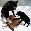 Wild Black Panther Simulator: Wildlife Attack