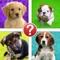 Puppies Pic Quiz - Dog Breeds by Puppy