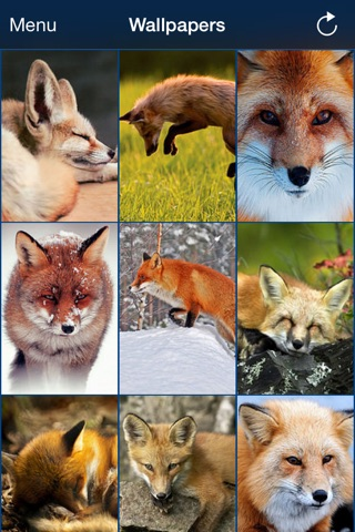 Wild animals wallpaper screenshot 1