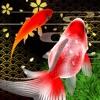 Sakura Goldfishing