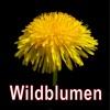 Wildblumen entdecken und bestimmen