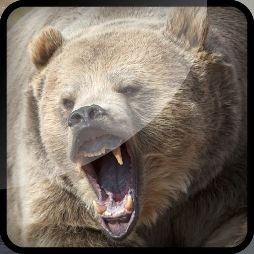 Grizzly Bear Hunt-ing Bullet Juggle Game iOS App