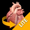 Cuore - 3D Atlas of Anatomy Preview