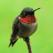 Hummingbird Tracker