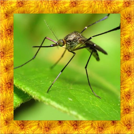 Mosquito Simulator 3D