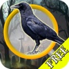 Free Hidden Objects:Midnight Mystery Find Objects and Solve Puzzles!