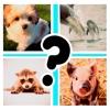 Cute Baby Animals Pics Quiz icon