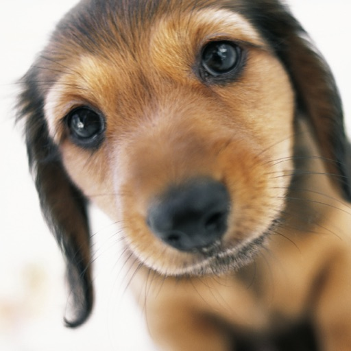 Puppy School: your complete puppy training and dog training guide