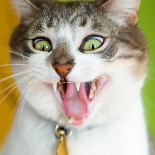 Cat Jokes - Best, cool and funny jokes! iOS App