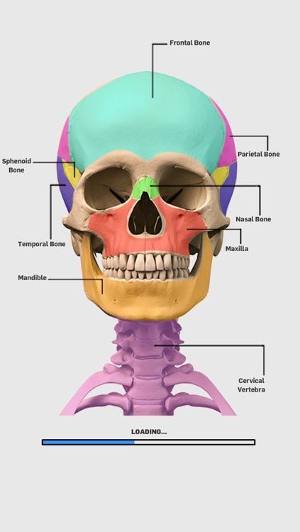 Skeletal Anatomy Game Lite By Nar Internet