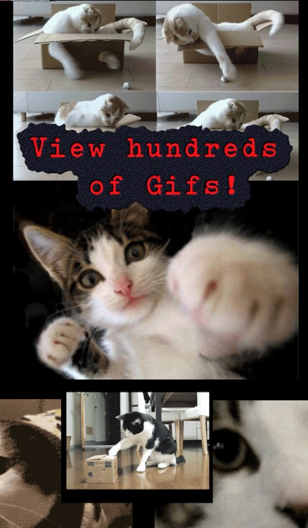 Image of: Memes Funny Cats Dogs Babies Pictures Videos Gifs Effects Twitter Funny Cats Dogs Babies Pictures Videos Gifs Effects By Bill Core