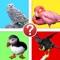 Bird Watcher Trivia - Identify Species Photo Quiz