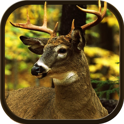 New Deer Hunting Defiance 2016 - The Real Shooting game for shooting lovers iOS App
