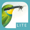 Sasol eBirds of Southern Africa LITE
