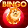 Doge Bingo Pro - Free Bingo Game