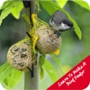 Learn To Make A Bird Feeder early bird