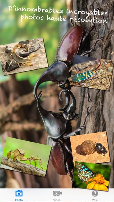 Insekten Welt Screenshot