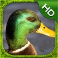 Duck Simulator - HD