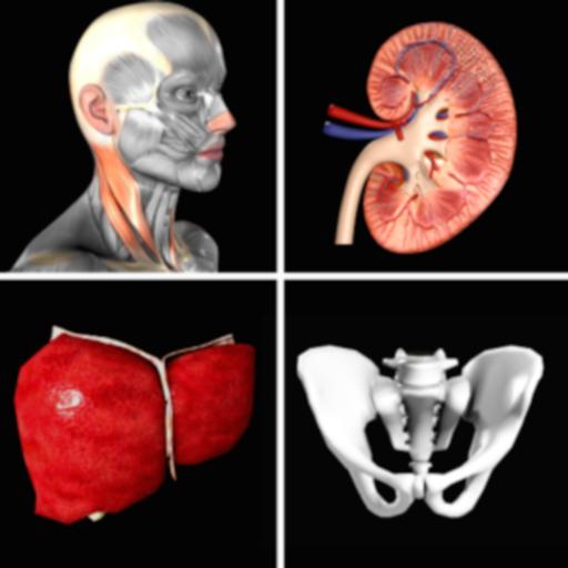 Anatomy Quiz+