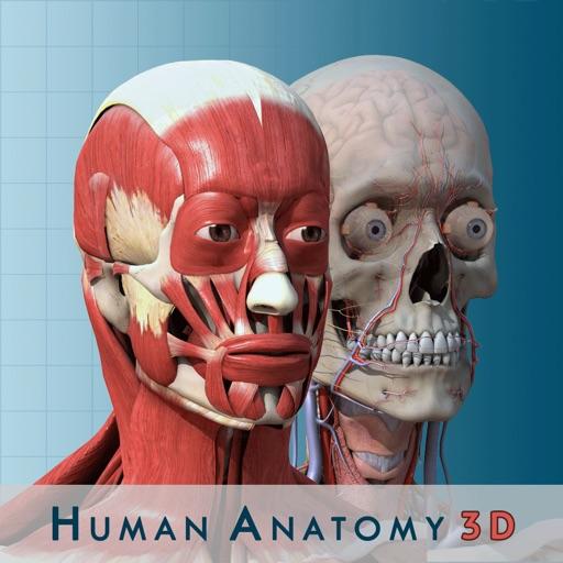 modele de corps humain bois application