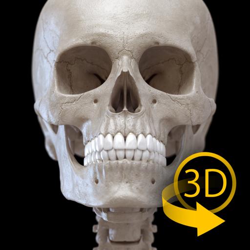Костная система - 3D Атлас анатомии – Кости человеческого скелета