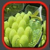Ares plays tennis