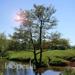Arbre Id – Le Guide français d'identification des arbres