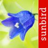 Blumen Id Automatik - Einheimische Wildblumen, Blüten und Kräuter bestimmen in Wiesen, Wald und Feldern
