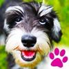 Hunde - Tierisch süße Grüße & Zitate für Hundefreunde