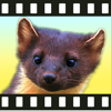 Movimals animal video app for kids and toddlers