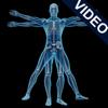 Animated Anatomy and Physiology for iPad - Jon Than Sim