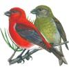 Голоса птиц - 3D