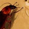 Nasty Cucaracha