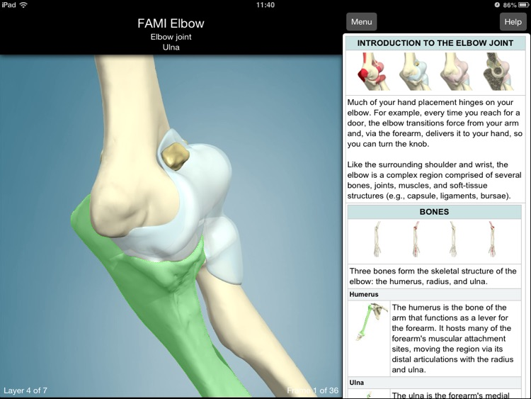 Functional Anatomy For Movement And Injuries Elbow By Primal