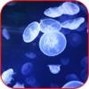 Jellyfish Wallpaper 3D HD,  Jellyfish Jigsaw Puzzle
