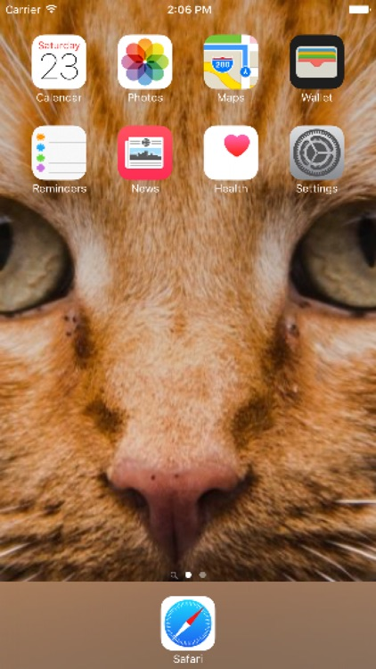 Cat wallpapers best cute cat kitten wallpapers by bekir resit kuccuk cat wallpapers best cute cat kitten wallpapers thecheapjerseys Gallery
