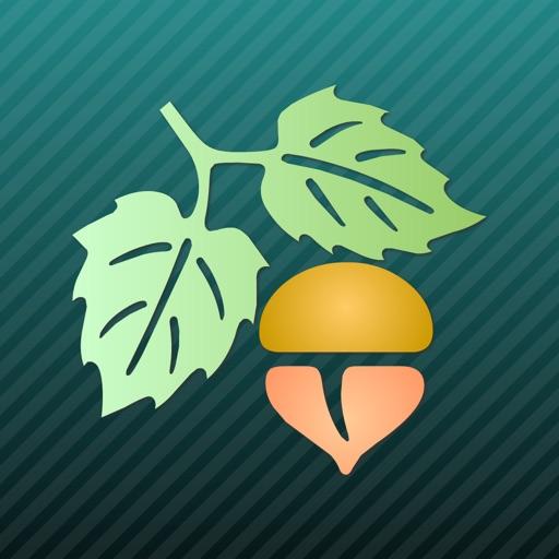 Focus on Plant