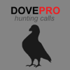 REAL Dove Calls and Dove Sounds for Bird Hunting! -- BLUETOOTH COMPATIBLE