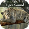 Tiger Sounds - Tiger Sounds for Kids