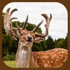 Wild Stag Animal Sniper Hunter Simulator 3D App