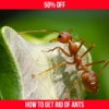 How To Get Rid Of Ants - Natural Methods red ants