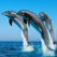 Dolphin Wallpapers - Best Collections Of Dolphin Pictures
