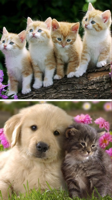 Cats Dogs Wallpapers In Hd Pictures Of Pets On The App Store